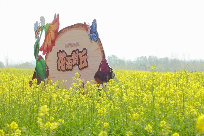 """""""人间四月,芳菲吐蕊""""商丘万亩油菜花生态旅游季已开园"""