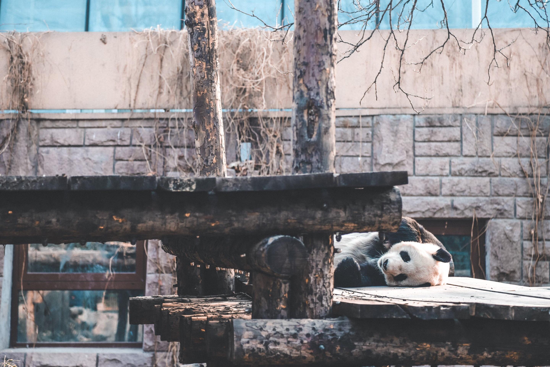 北京动物园简介绍(图文)